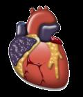 اطباء القلب والشرايين