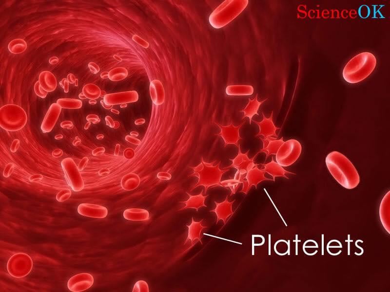 تجلط الدم اسبابه و اعراضه و علاجه