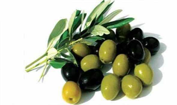 الوقاية من امراض القلب و تصلب الشرايين بتناول الزيتون