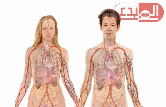 باحثون : اكتشاف عضو جديد فى جسم الإنسان