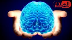 أغذية تعزز وظائف الدماغ!