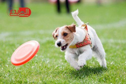 دراسة أمريكية: التمشية مع الكلاب تجعل كبار السن أكثر نشاطا