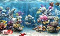علماء يكتشفون مضادات حيوية طبيعية في أعماق البحار