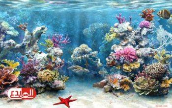علماء فرنسيون يسعون لاستخلاص عقار مضاد للسرطان من الشعاب المرجانية