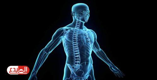دراسة: اكتشاف عضو جديد دقيق للغاية داخل جسم الإنسان